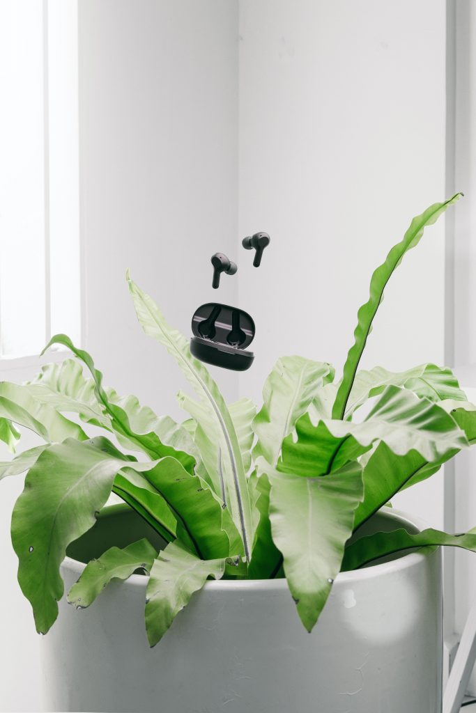 plant and ear buds